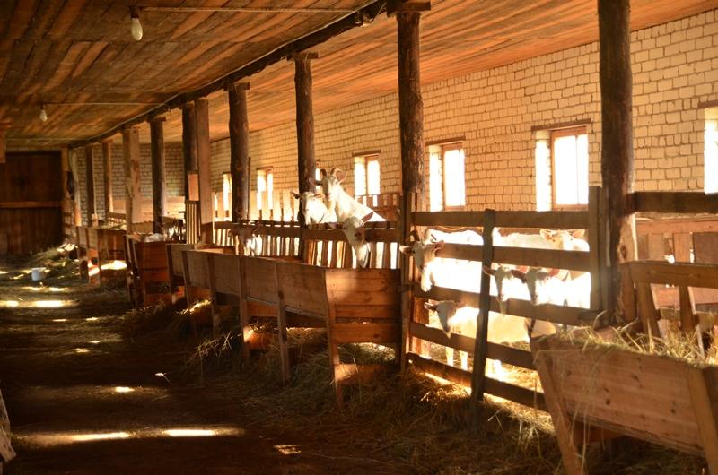 Ферма Северная Надежда